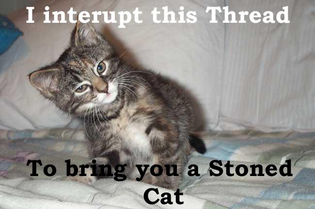 [Image: Stoned_Cat.jpg]
